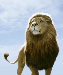 Aslan, Chronicles of Narnia